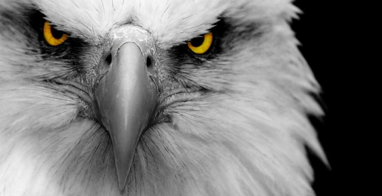 eagle team 4