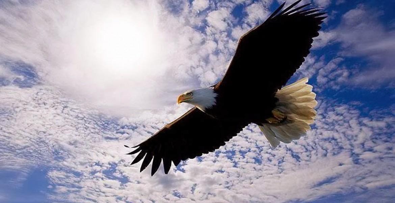 team eagles